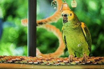 Parrot want to escape